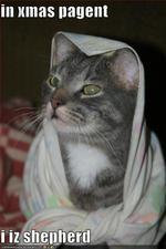 Shepcat